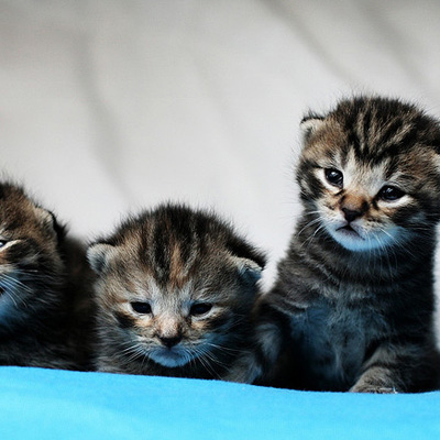 unconventional-love-for-kittens