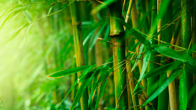 Uses Of Bamboo